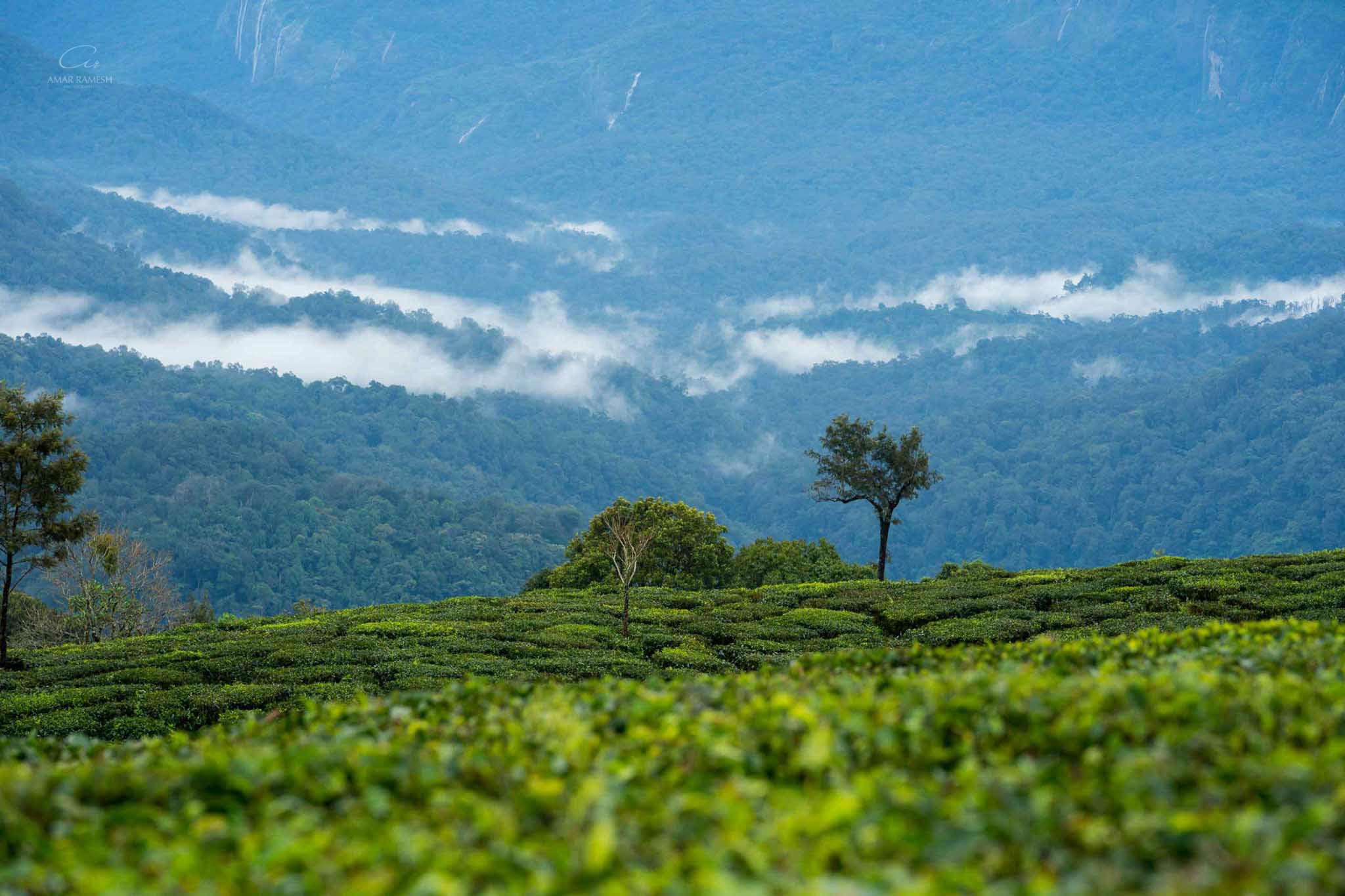 pollachi-tea-estate-pictures