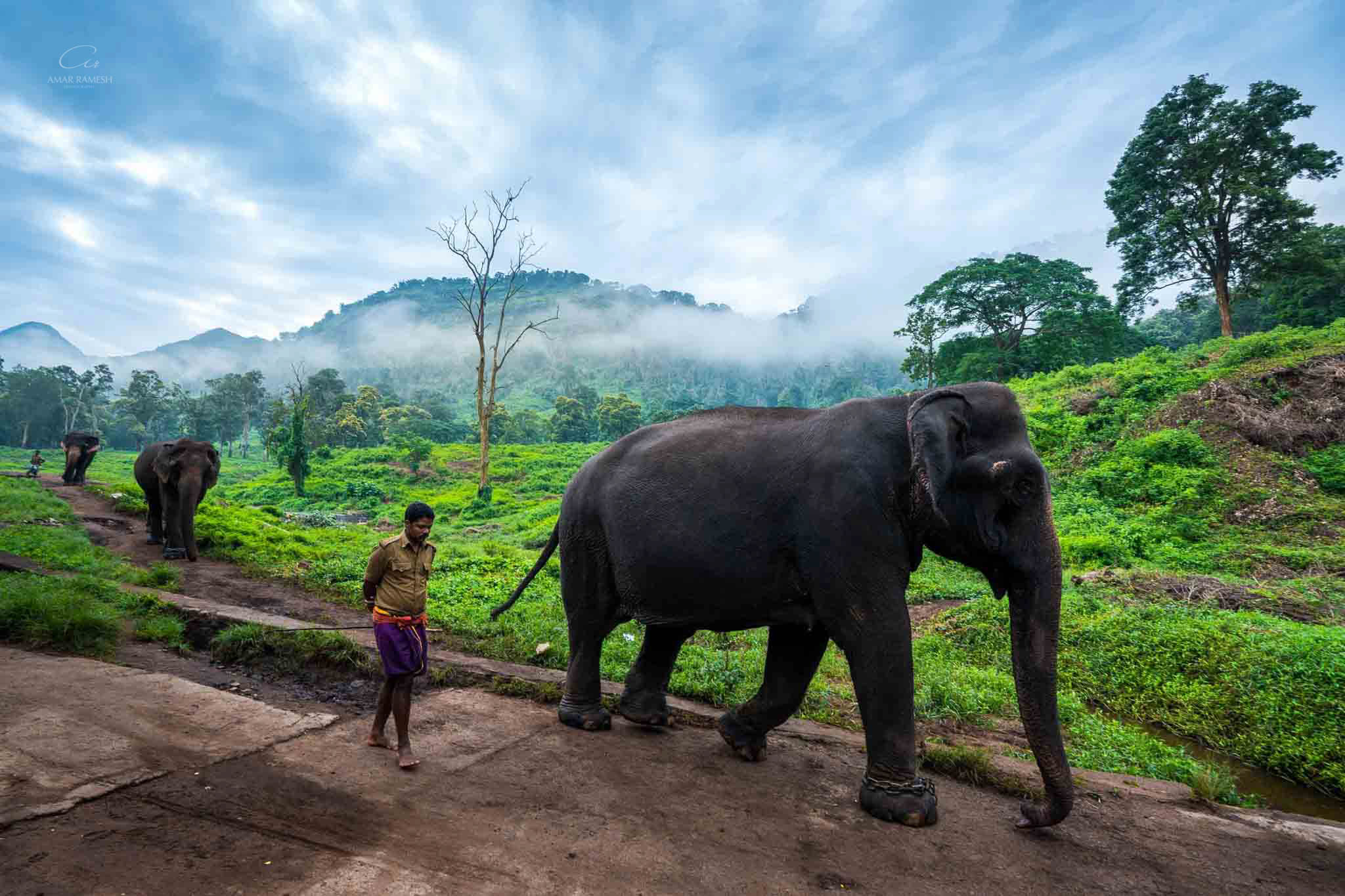 valparai-elephant-photos